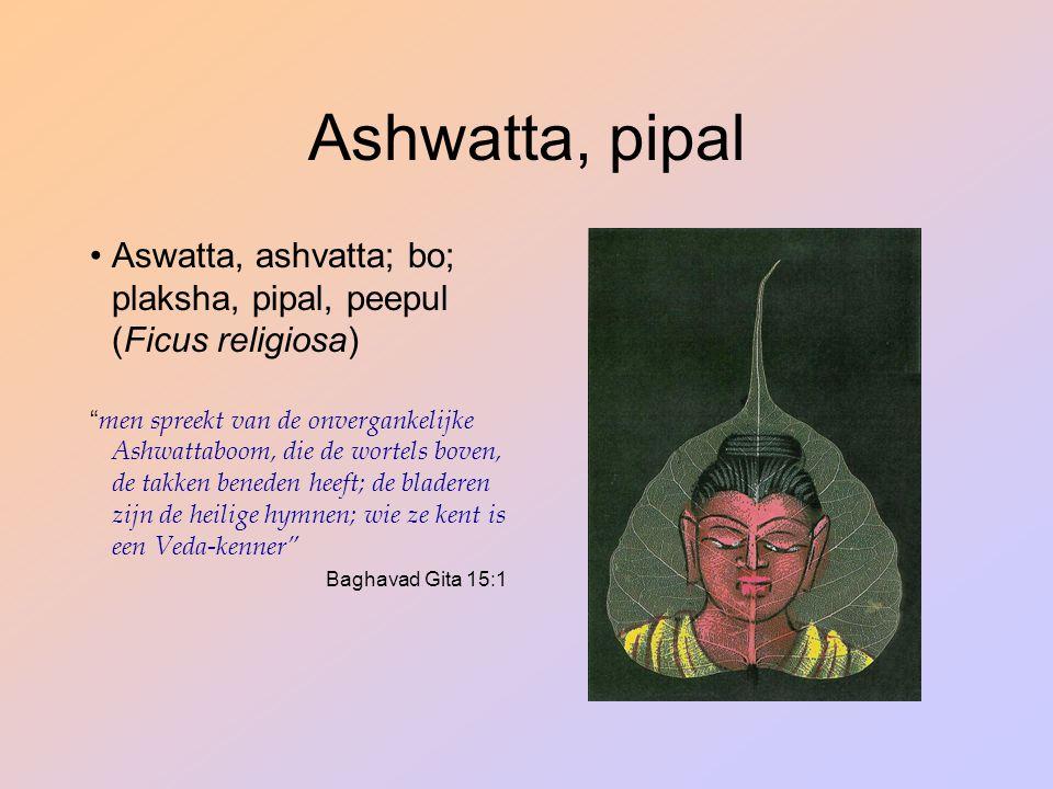 "Ashwatta, pipal Aswatta, ashvatta; bo; plaksha, pipal, peepul (Ficus religiosa) "" men spreekt van de onvergankelijke Ashwattaboom, die de wortels bove"