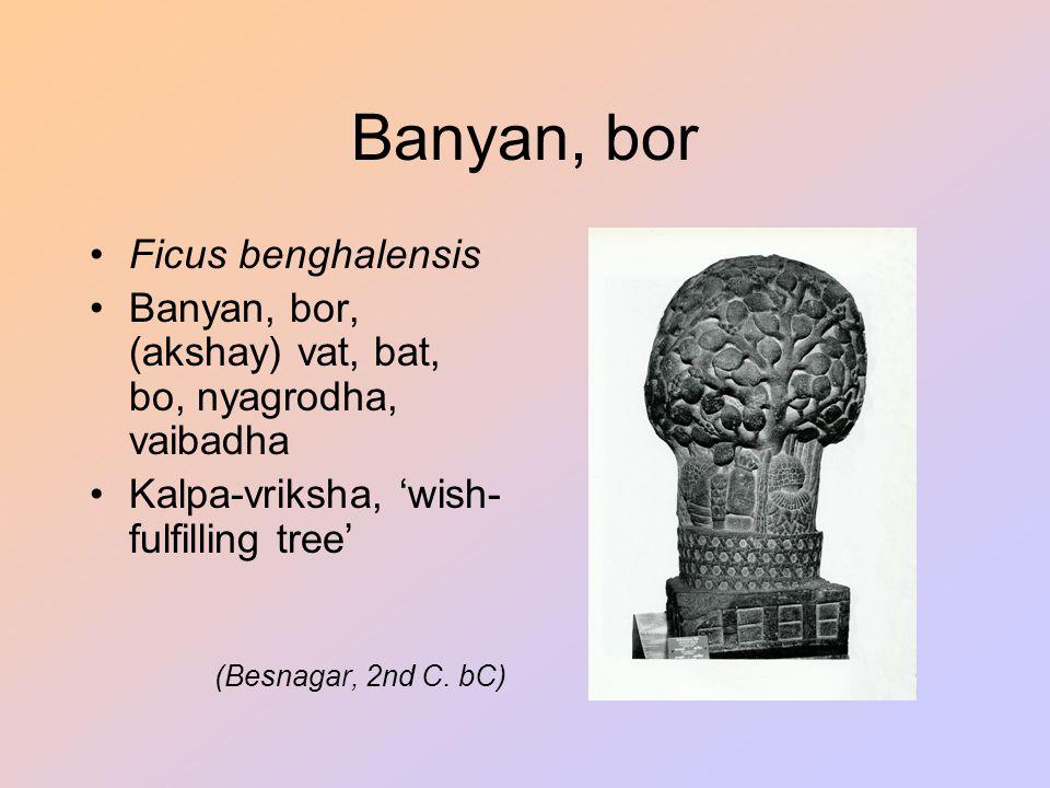 Banyan, bor Ficus benghalensis Banyan, bor, (akshay) vat, bat, bo, nyagrodha, vaibadha Kalpa-vriksha, 'wish- fulfilling tree' (Besnagar, 2nd C. bC)