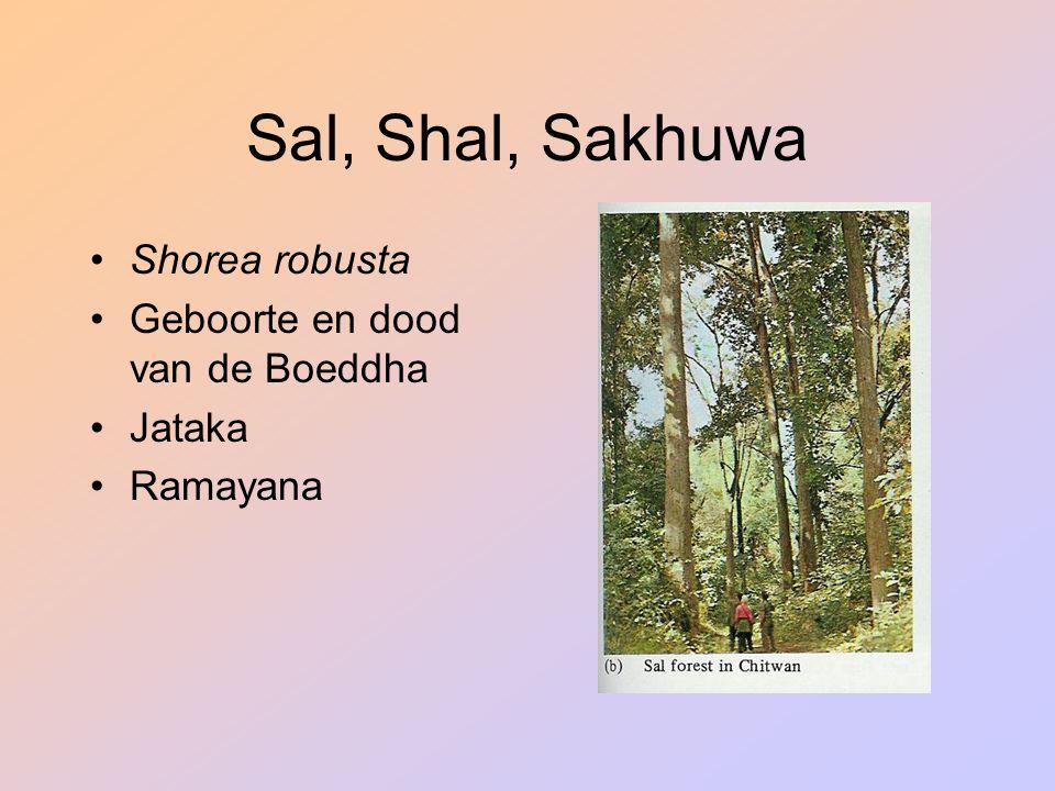 Sal, Shal, Sakhuwa Shorea robusta Geboorte en dood van de Boeddha Jataka Ramayana