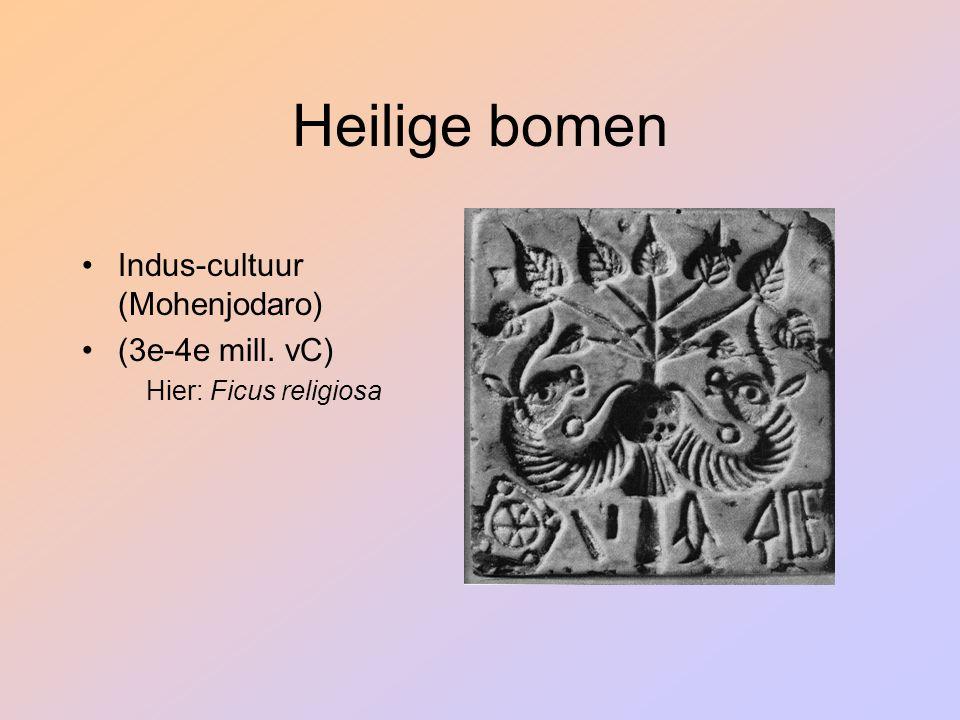 Heilige bomen Indus-cultuur (Mohenjodaro) (3e-4e mill. vC) Hier: Ficus religiosa