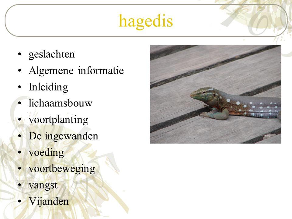 hagedis geslachten Algemene informatie Inleiding lichaamsbouw voortplanting De ingewanden voeding voortbeweging vangst Vijanden