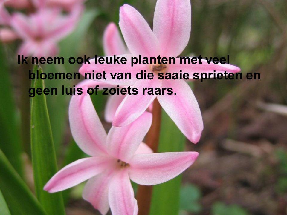 Ik neem ook leuke planten met veel bloemen niet van die saaie sprieten en geen luis of zoiets raars.