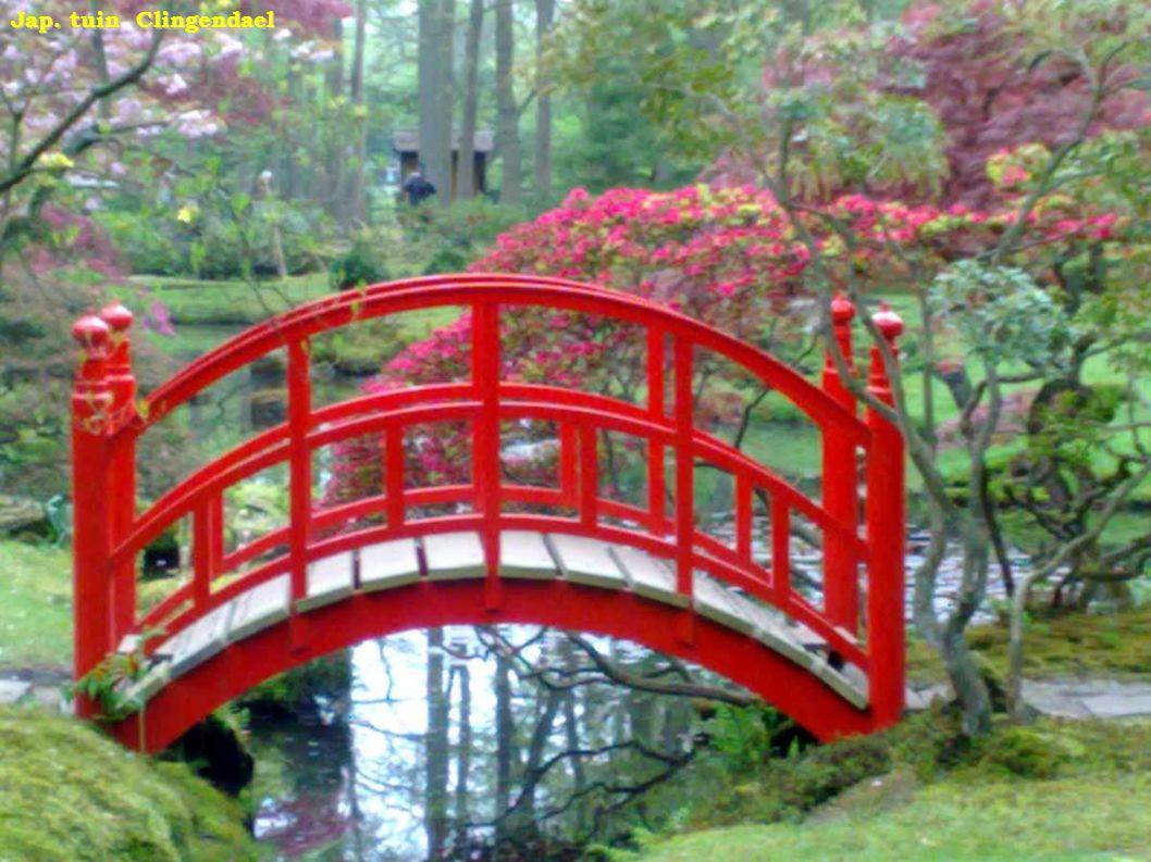Jardín Japonés - Flor del duraznero