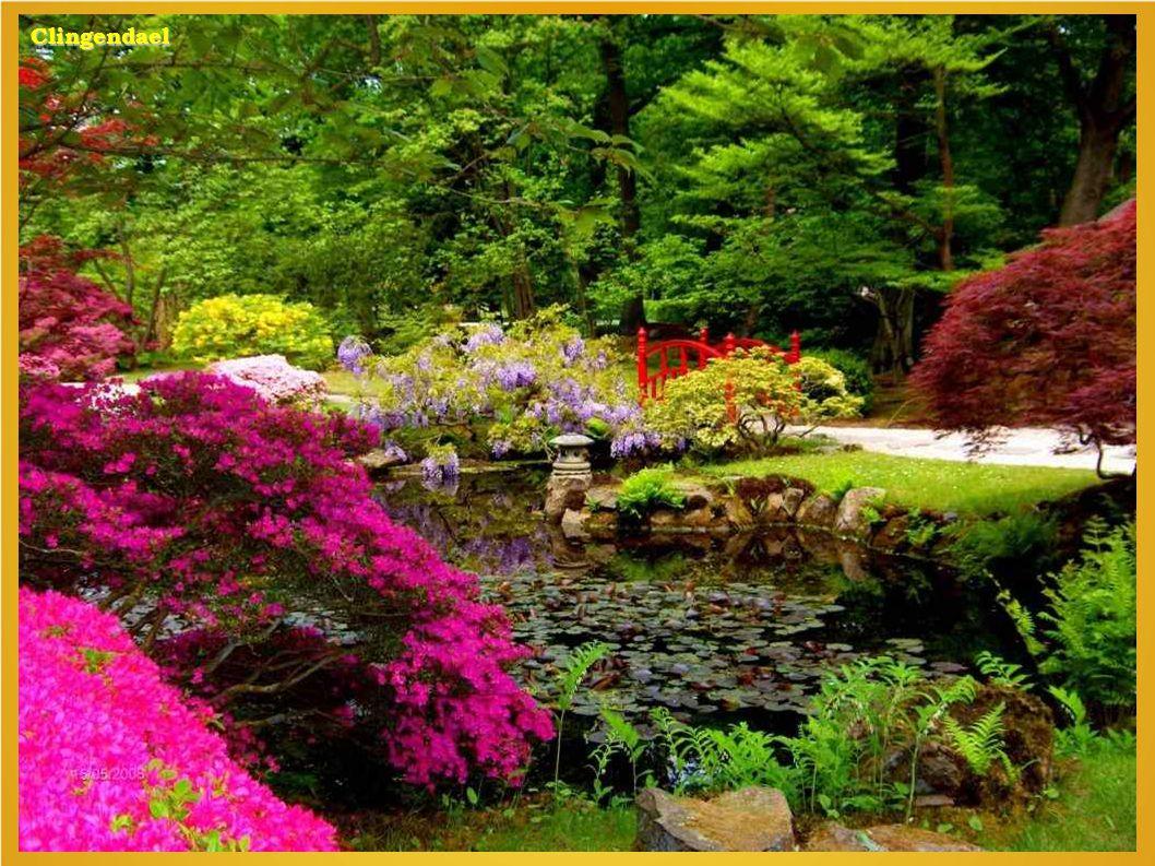 Jap. tuin clingendael Bot tuin Wrocklow. Clingendael japanse tuin.