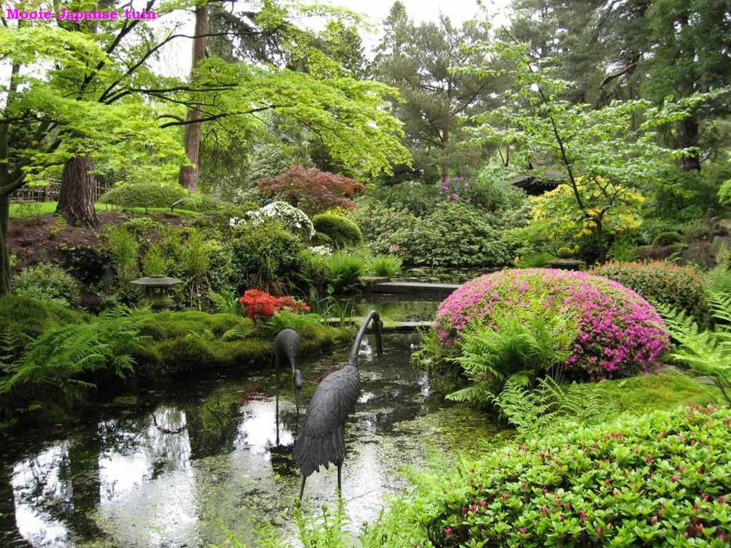 Bloeiende Japanse kers