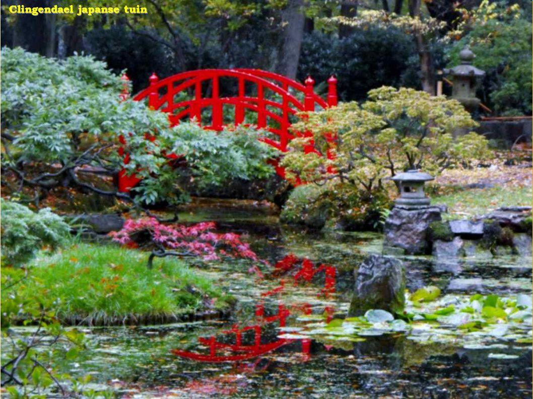 Mooie Japanse tuin