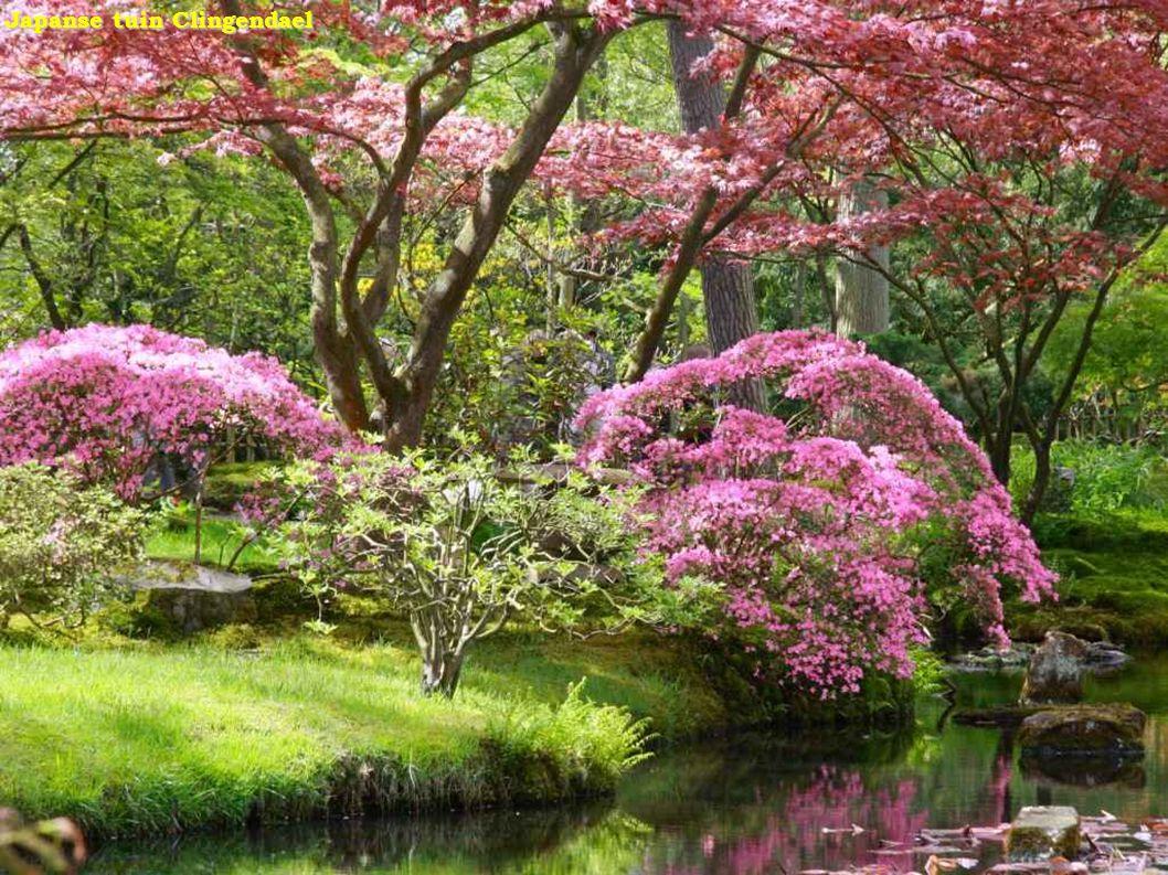 Japanse tuin - yun Japanse tuin - yun _