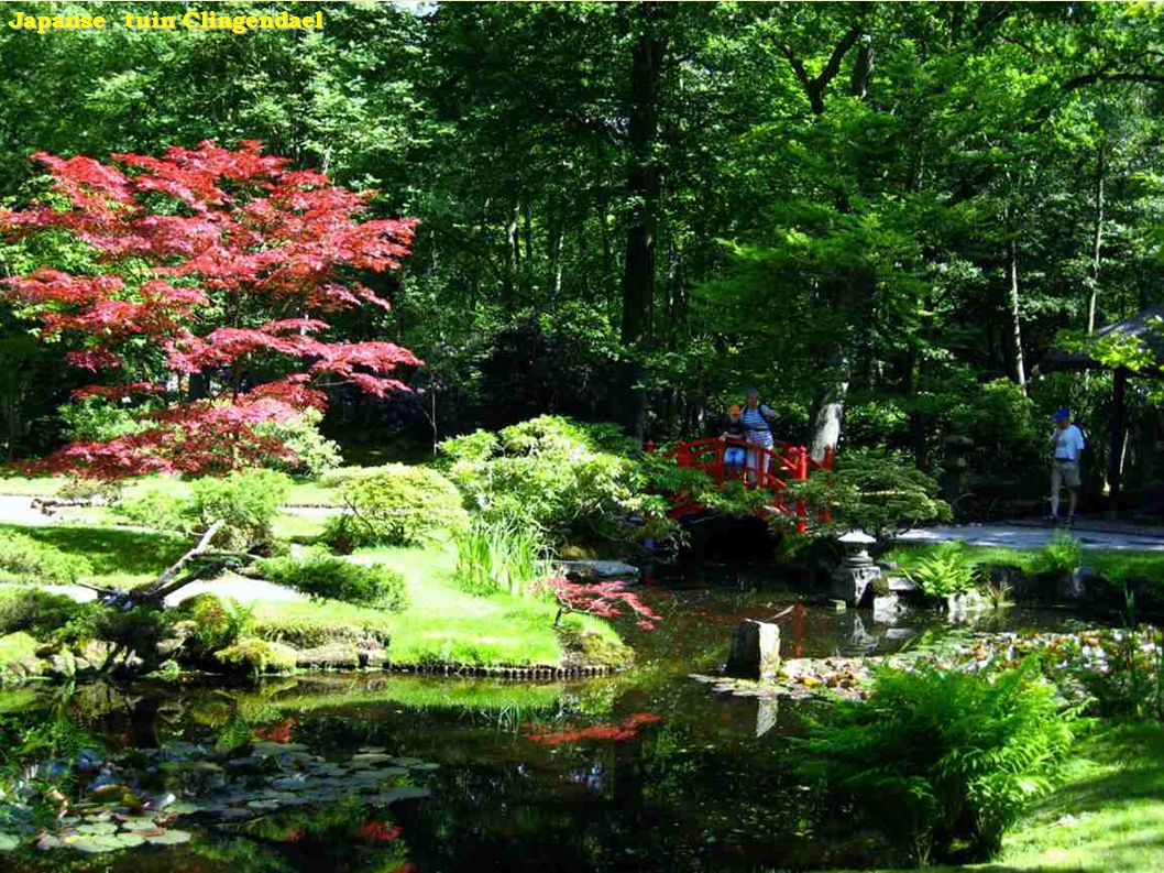 Jardín Japones - Azaleas Jardín Japones - Azaleas
