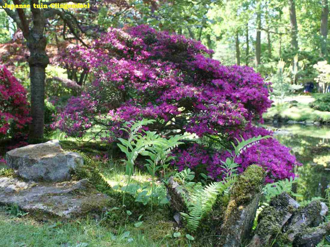 Jardín Japonés - Vista del lago