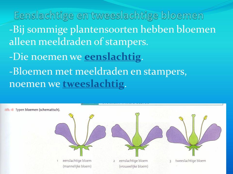 -Bij sommige plantensoorten hebben bloemen alleen meeldraden of stampers.