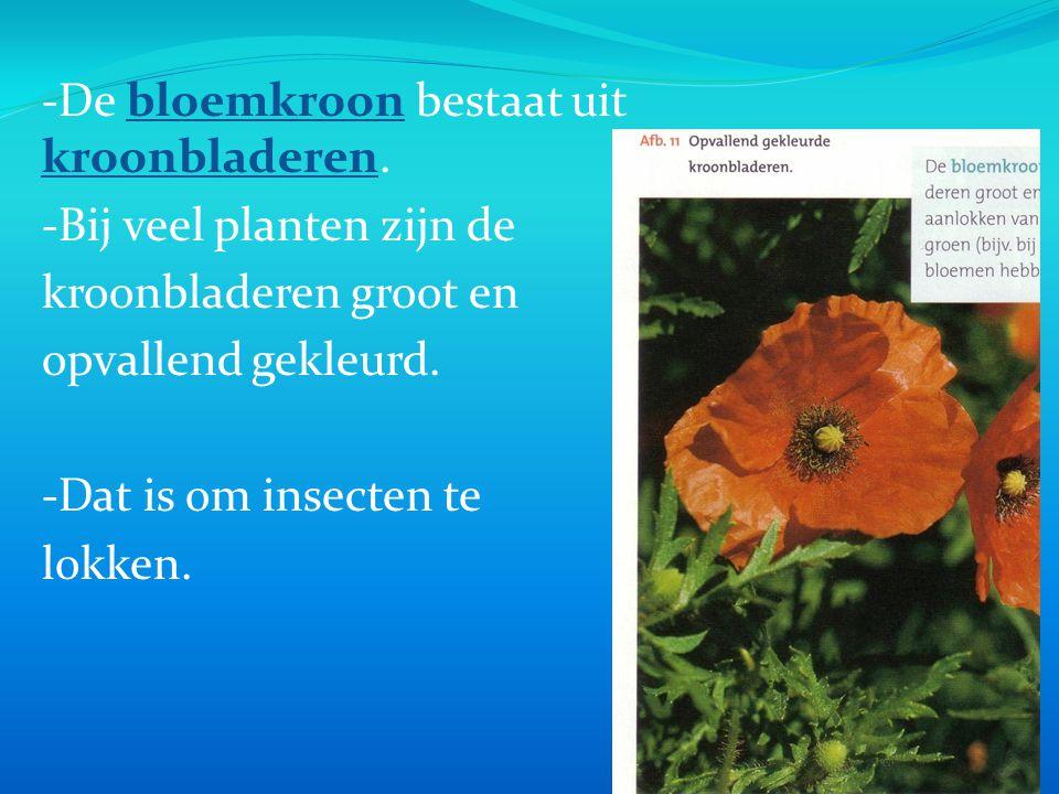 -De bloemkroon bestaat uit kroonbladeren.