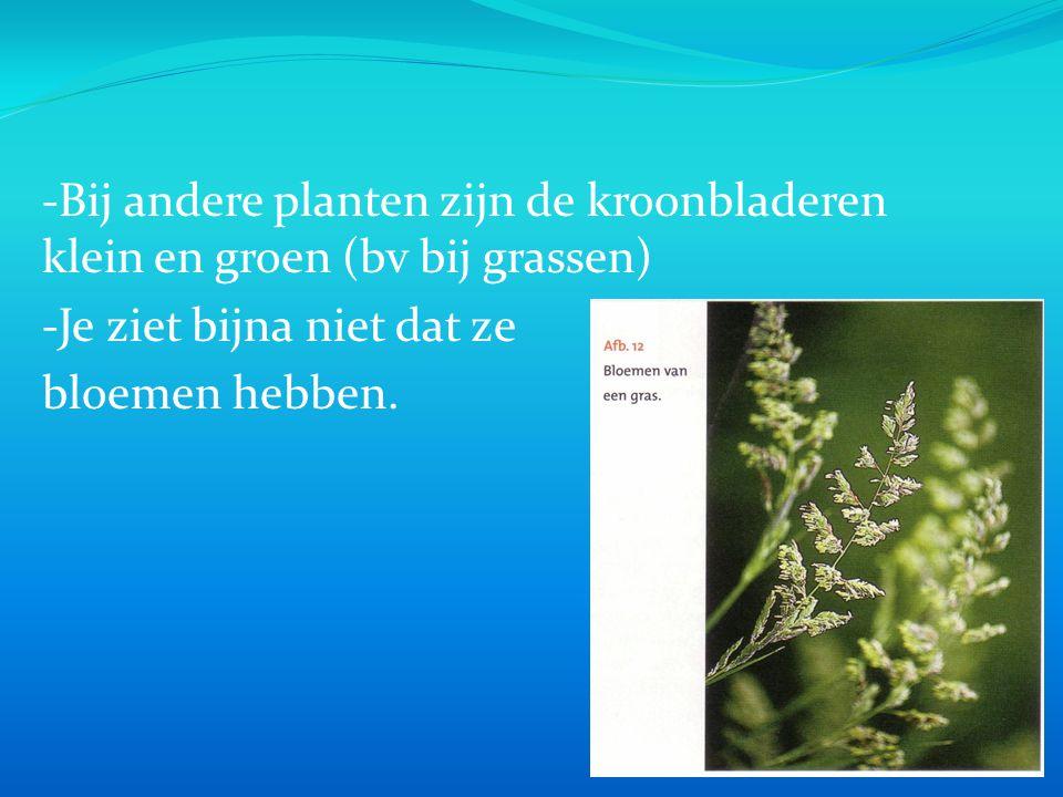 -Bij andere planten zijn de kroonbladeren klein en groen (bv bij grassen) -Je ziet bijna niet dat ze bloemen hebben.