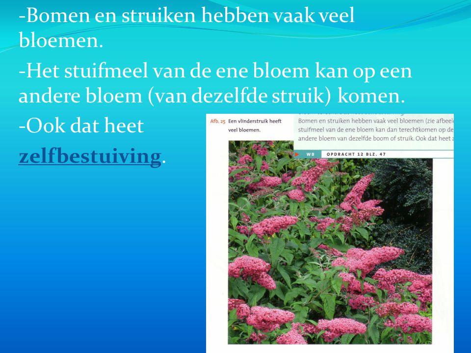 -Bomen en struiken hebben vaak veel bloemen. -Het stuifmeel van de ene bloem kan op een andere bloem (van dezelfde struik) komen. -Ook dat heet zelfbe
