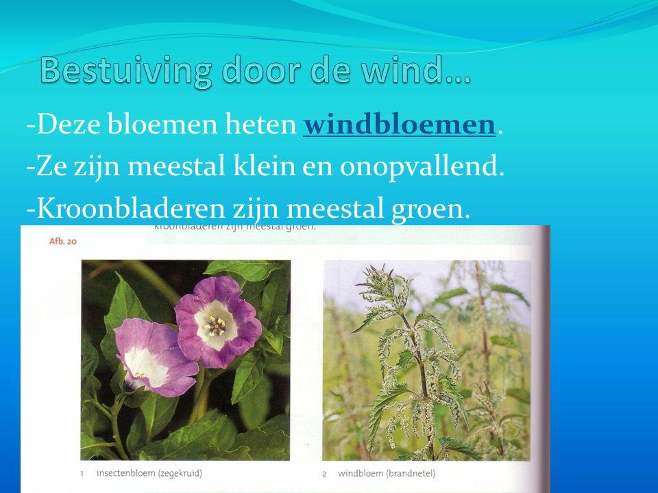 - Bij insectenbloemen gaan insecten op zoek naar nectar.
