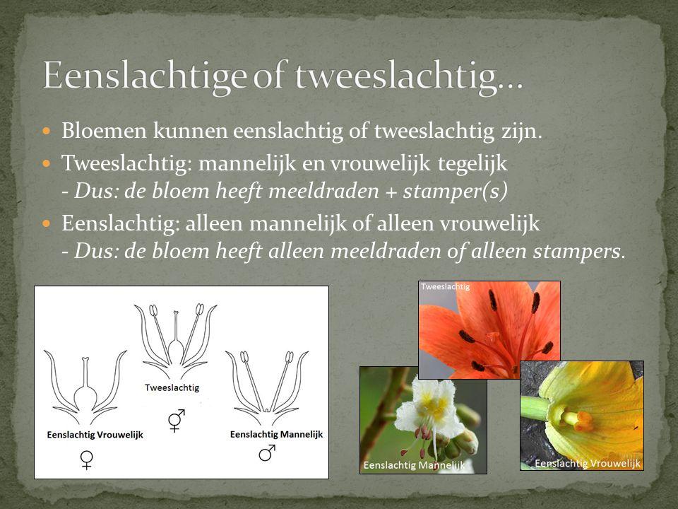 Tweehuizig: als bij een bepaalde plantensoort de planten óf alleen mannelijke óf alleen vrouwelijke bloemen dragen.