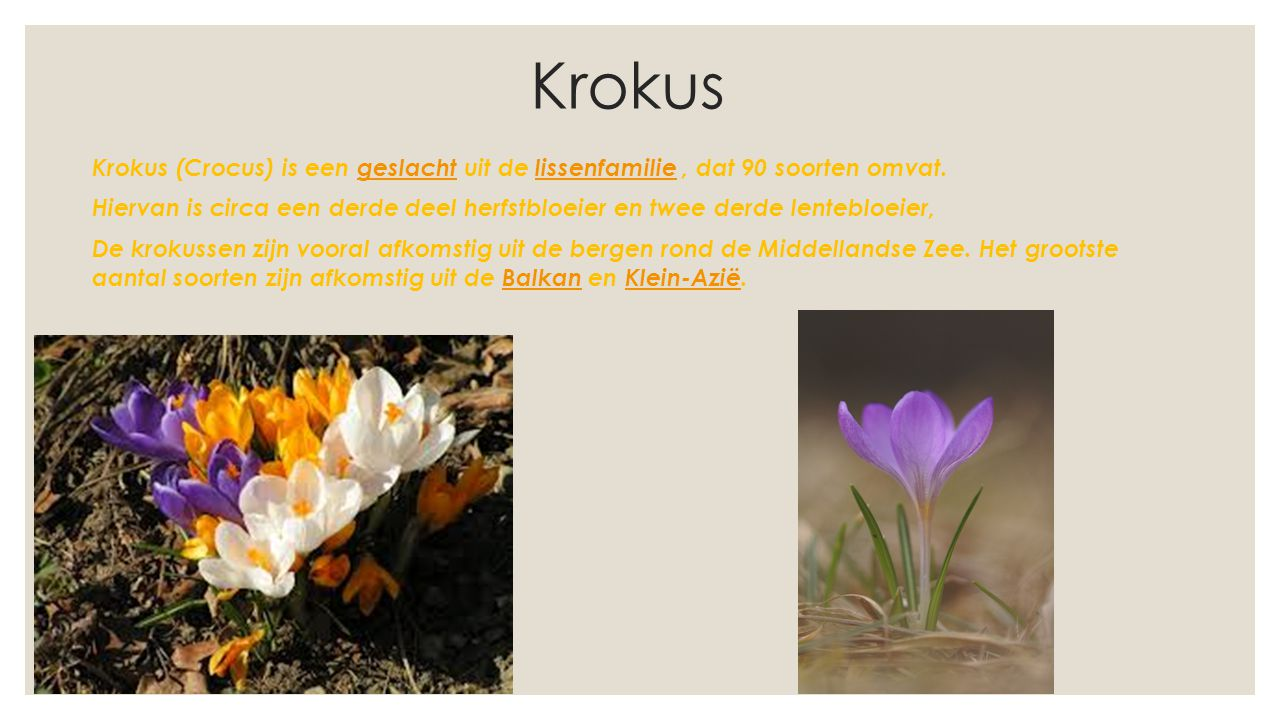 Krokus Krokus (Crocus) is een geslacht uit de lissenfamilie, dat 90 soorten omvat.geslachtlissenfamilie Hiervan is circa een derde deel herfstbloeier