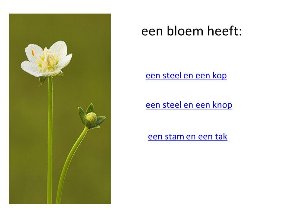 een bloem heeft: een steel en een kop een steel en een knop een stam en een tak