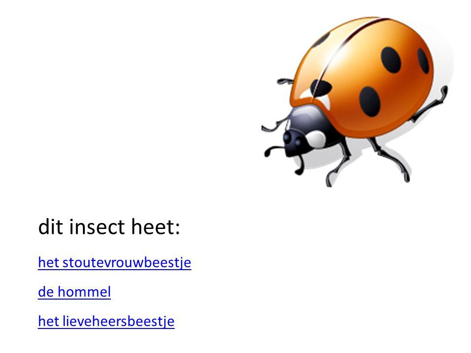 dit insect heet: het lieveheersbeestje de hommel het stoutevrouwbeestje