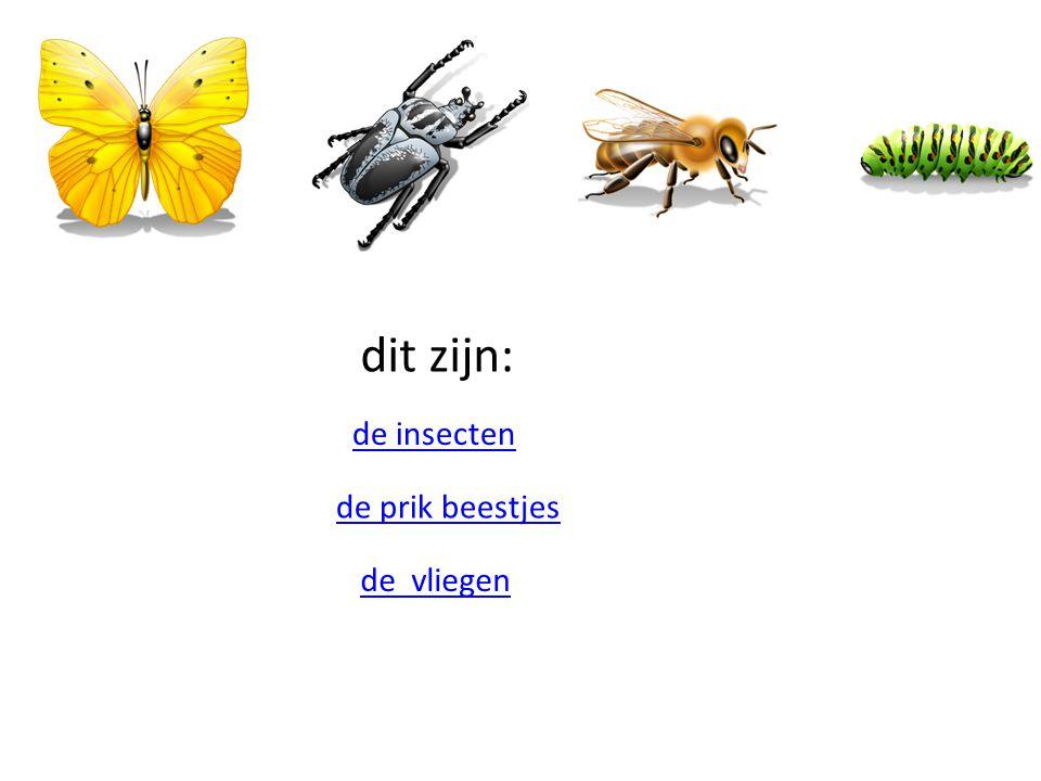 dit zijn: de insecten de prik beestjes de vliegen