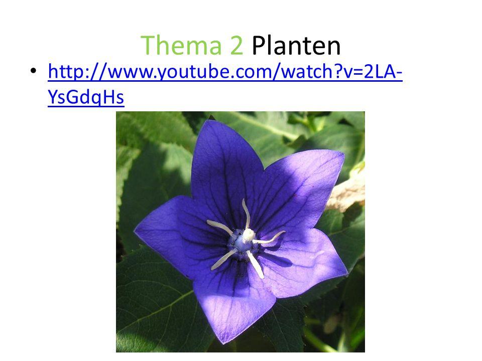 2 manieren; insecten/wind Windbloem (veel stuifmeel)Insectenbloem (weinig stuifmeel)