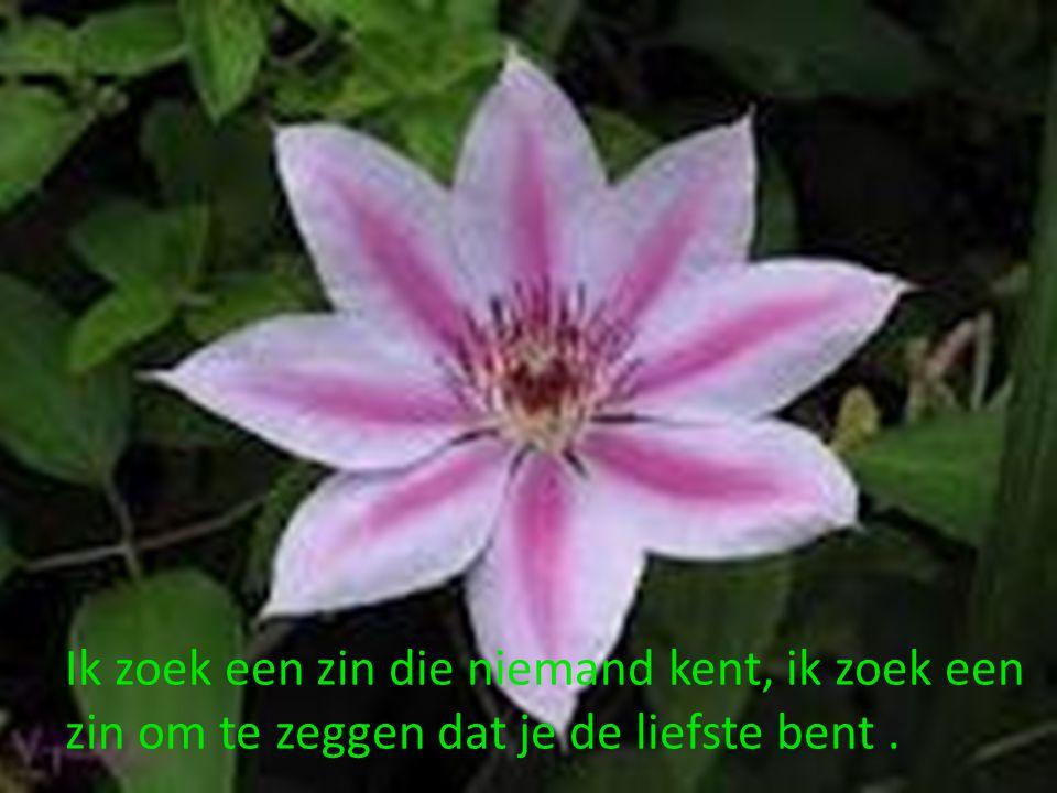 Als bloemen dromen weet ik niet, maar ik pluk de allermooiste bloem om naar jou te sturen.