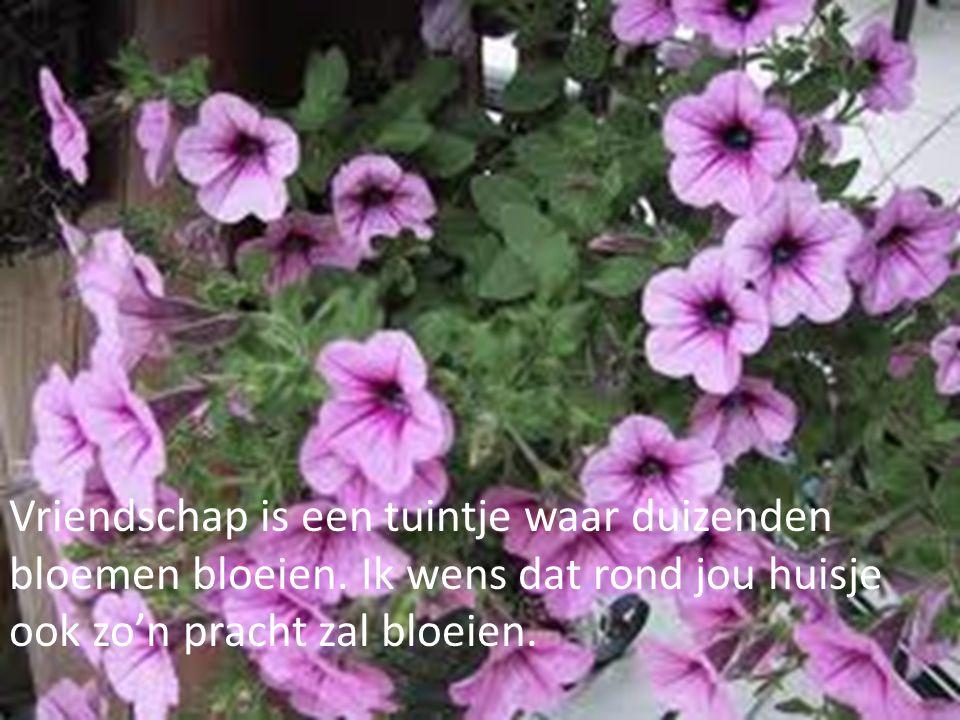 Vriendschap is een tuintje waar duizenden bloemen bloeien. Ik wens dat rond jou huisje ook zo'n pracht zal bloeien.