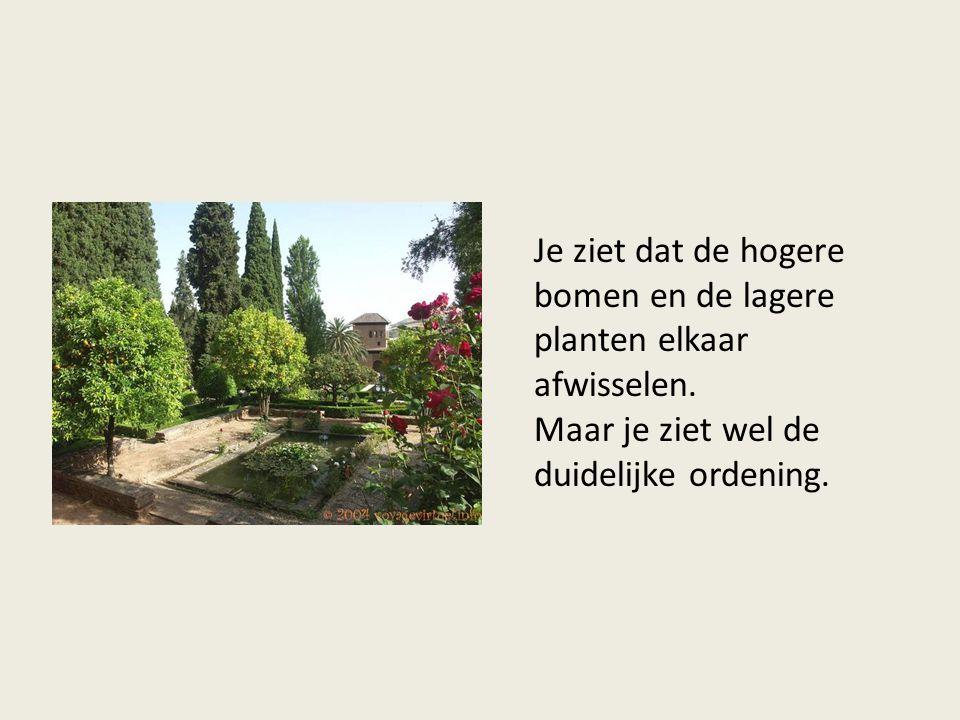 Je ziet dat de hogere bomen en de lagere planten elkaar afwisselen.