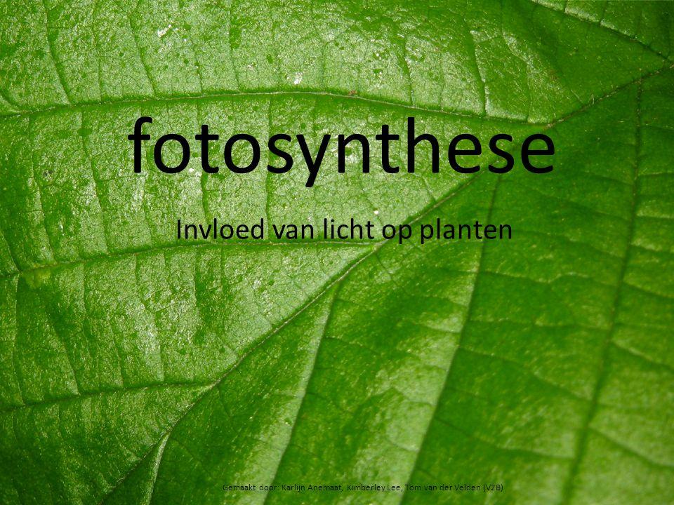 fotosynthese Invloed van licht op planten Gemaakt door: Karlijn Anemaat, Kimberley Lee, Tom van der Velden (V2B)