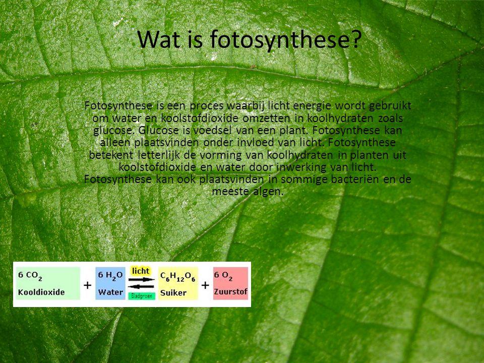 Wat is fotosynthese? Fotosynthese is een proces waarbij licht energie wordt gebruikt om water en koolstofdioxide omzetten in koolhydraten zoals glucos