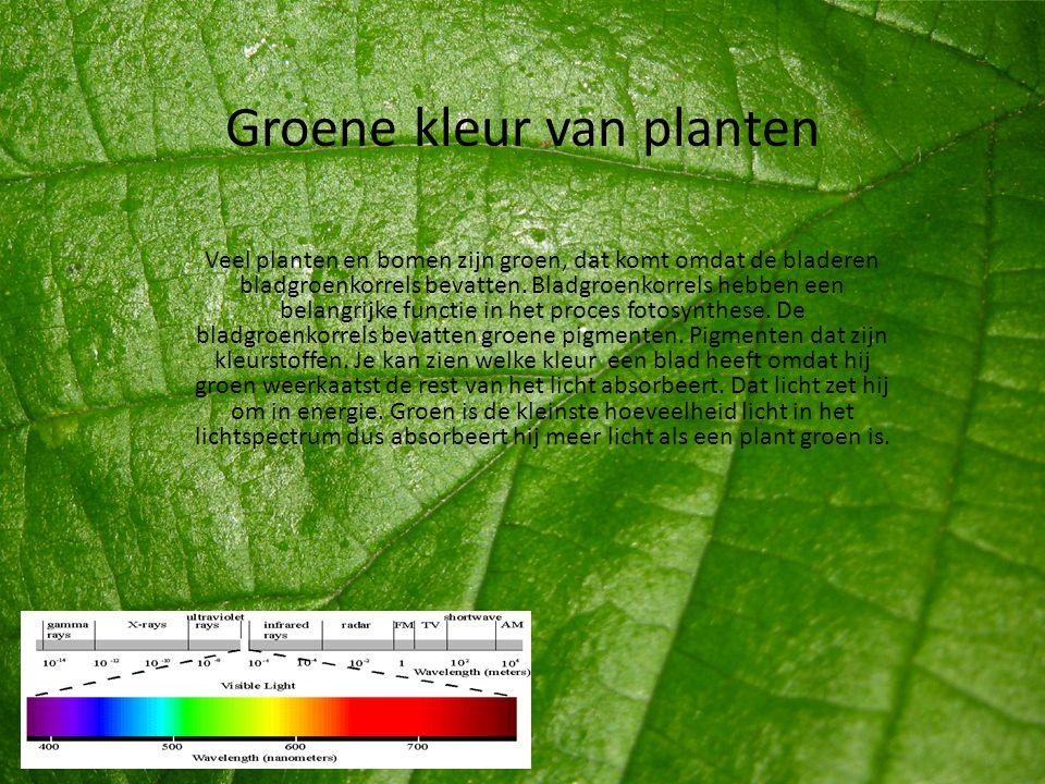 Groene kleur van planten Veel planten en bomen zijn groen, dat komt omdat de bladeren bladgroenkorrels bevatten. Bladgroenkorrels hebben een belangrij