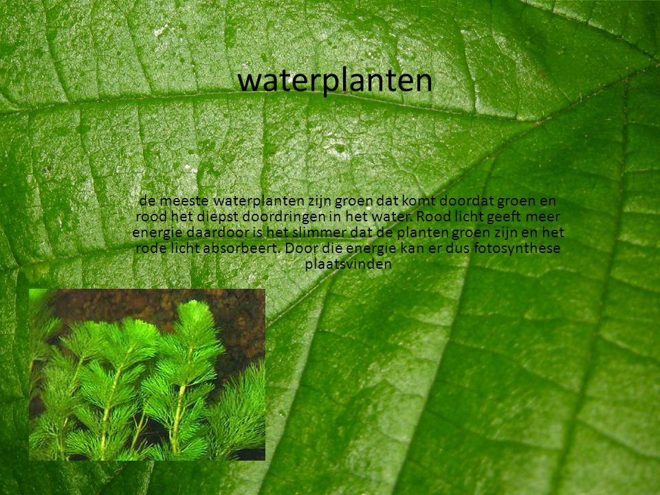 waterplanten de meeste waterplanten zijn groen dat komt doordat groen en rood het diepst doordringen in het water. Rood licht geeft meer energie daard