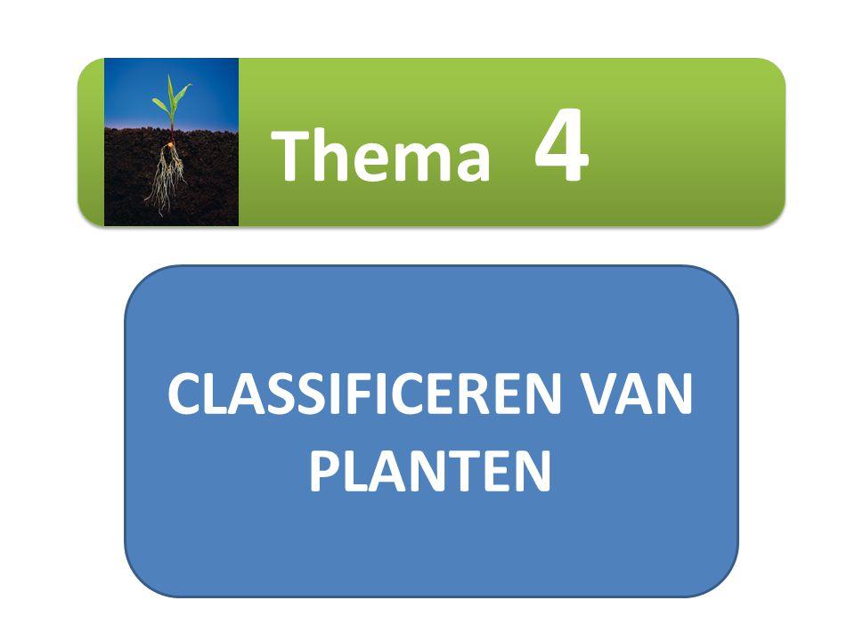 CLASSIFICEREN VAN PLANTEN Thema 4