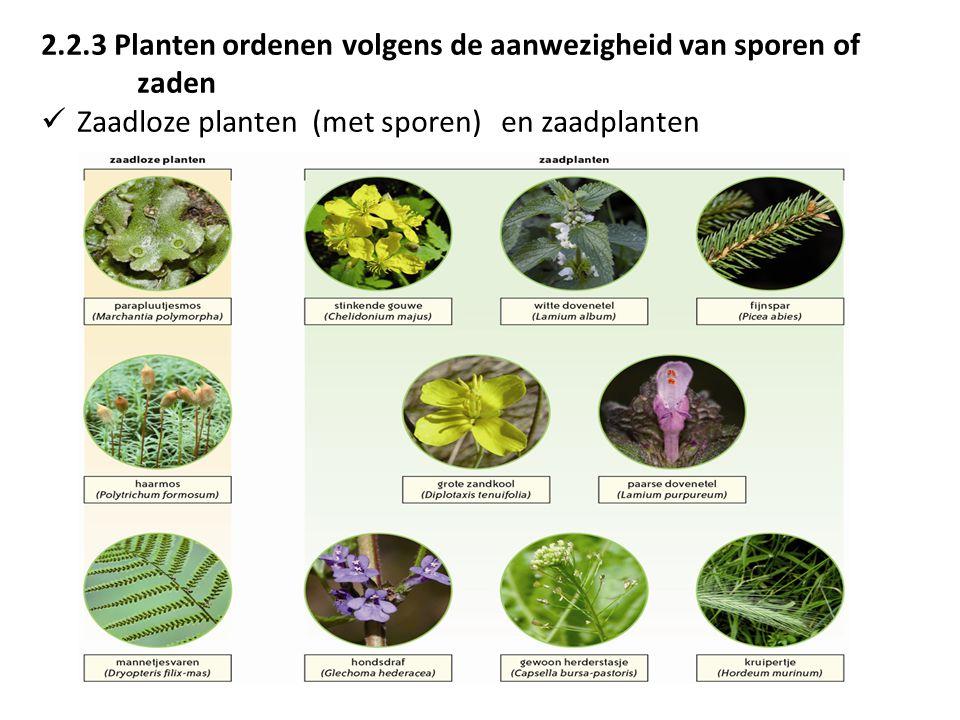 2.2.3 Planten ordenen volgens de aanwezigheid van sporen of zaden Zaadloze planten (met sporen) en zaadplanten