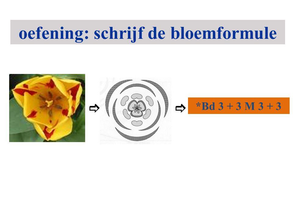 *Bd 3 + 3 M 3 + 3  oefening: schrijf de bloemformule