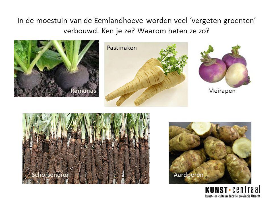 In de moestuin van de Eemlandhoeve worden veel 'vergeten groenten' verbouwd.