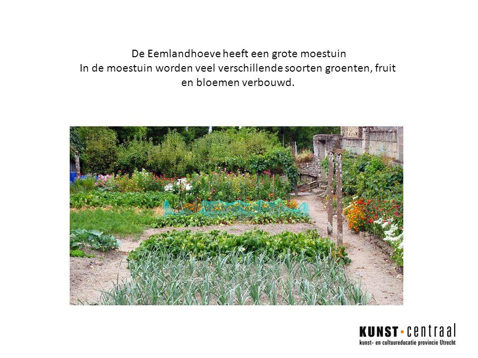 De Eemlandhoeve heeft een grote moestuin In de moestuin worden veel verschillende soorten groenten, fruit en bloemen verbouwd.