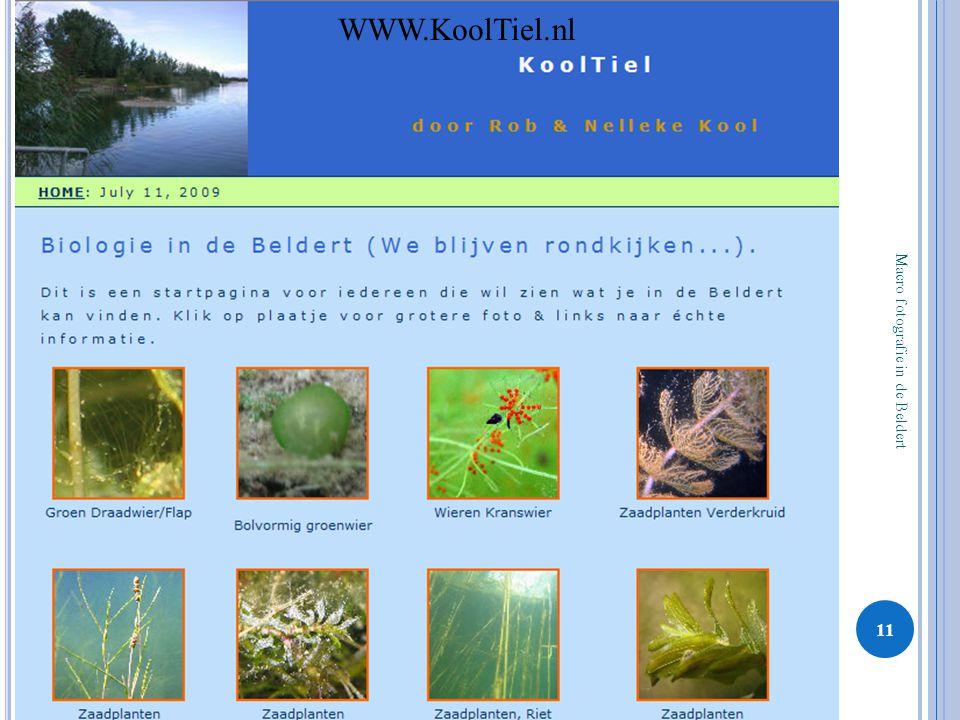 Macro fotografie in de Beldert 11 WWW.KoolTiel.nl