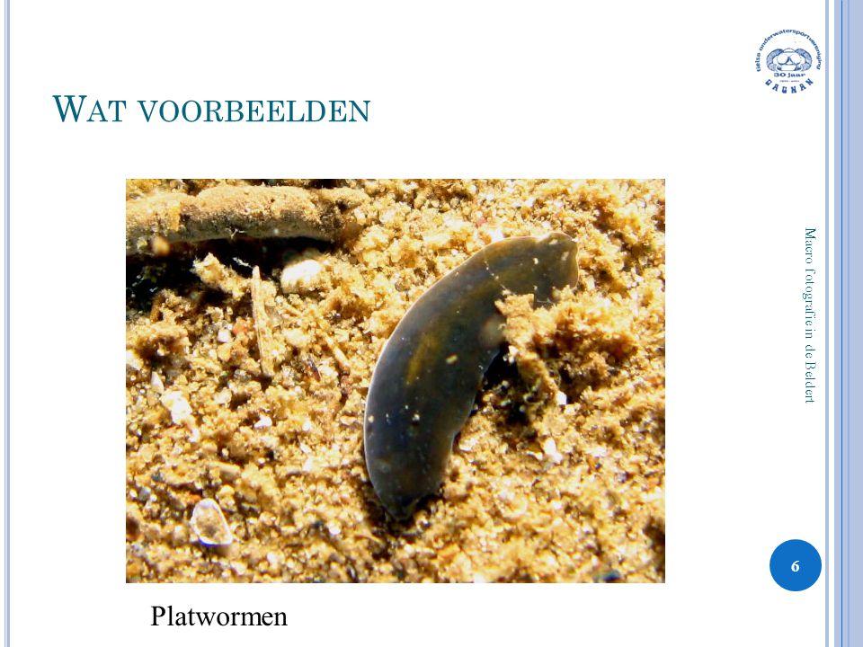 W AT VOORBEELDEN 6 Macro fotografie in de Beldert Platwormen