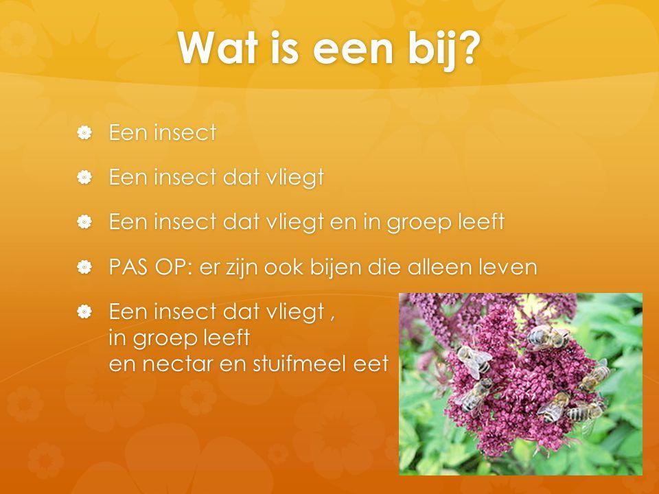 Waar komen bijen voor?  Gans de wereld behalve…