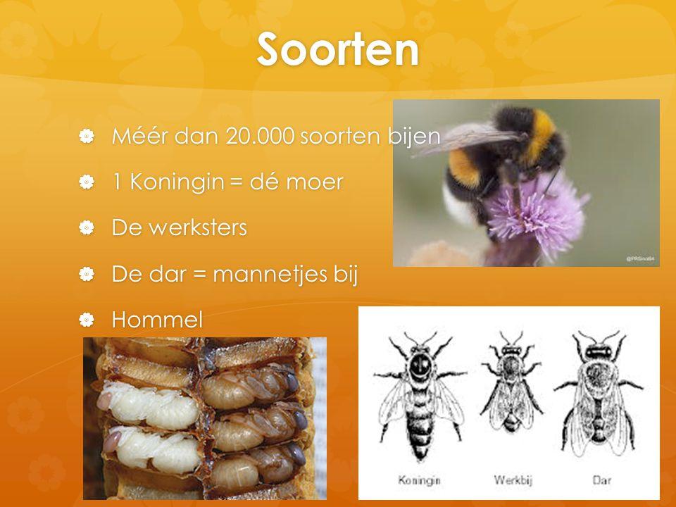 Soorten  Méér dan 20.000 soorten bijen  1 Koningin = dé moer  De werksters  De dar = mannetjes bij  Hommel