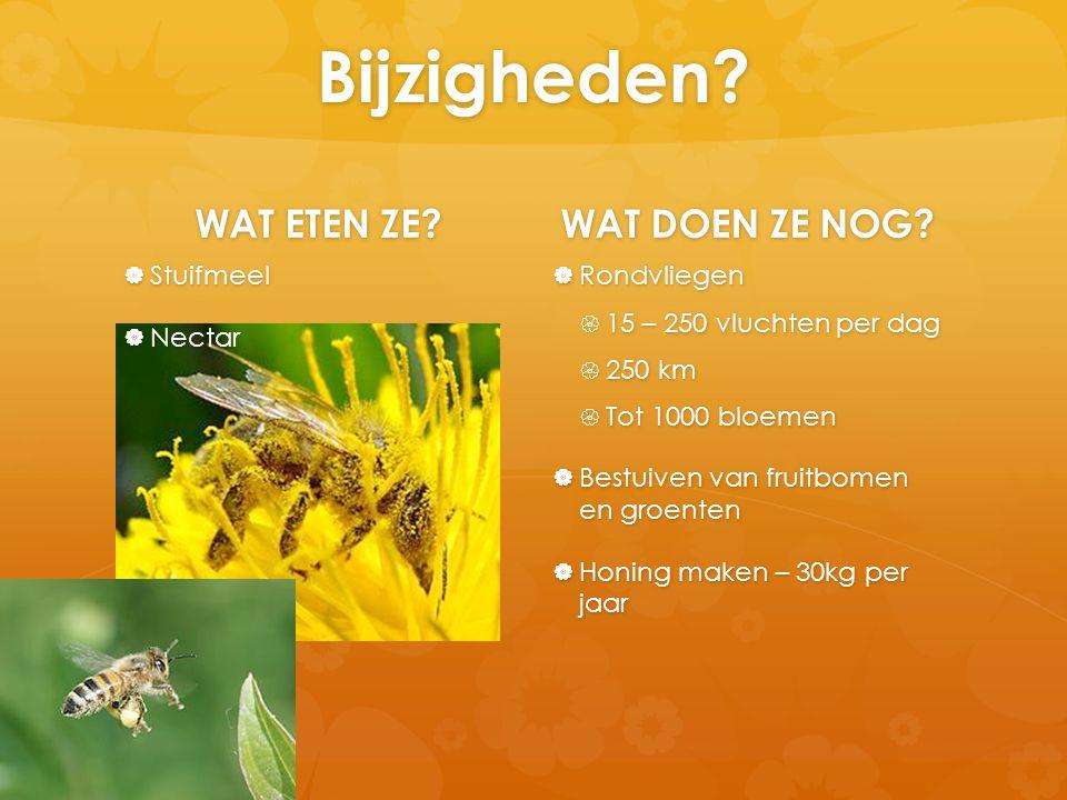 Bijzigheden? WAT ETEN ZE?  Stuifmeel  Nectar WAT DOEN ZE NOG?  Rondvliegen  15 – 250 vluchten per dag  250 km  Tot 1000 bloemen  Bestuiven van