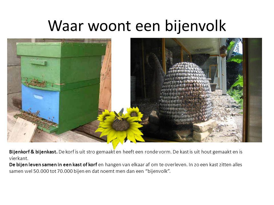 Waar woont een bijenvolk Bijenkorf & bijenkast. De korf is uit stro gemaakt en heeft een ronde vorm. De kast is uit hout gemaakt en is vierkant. De bi