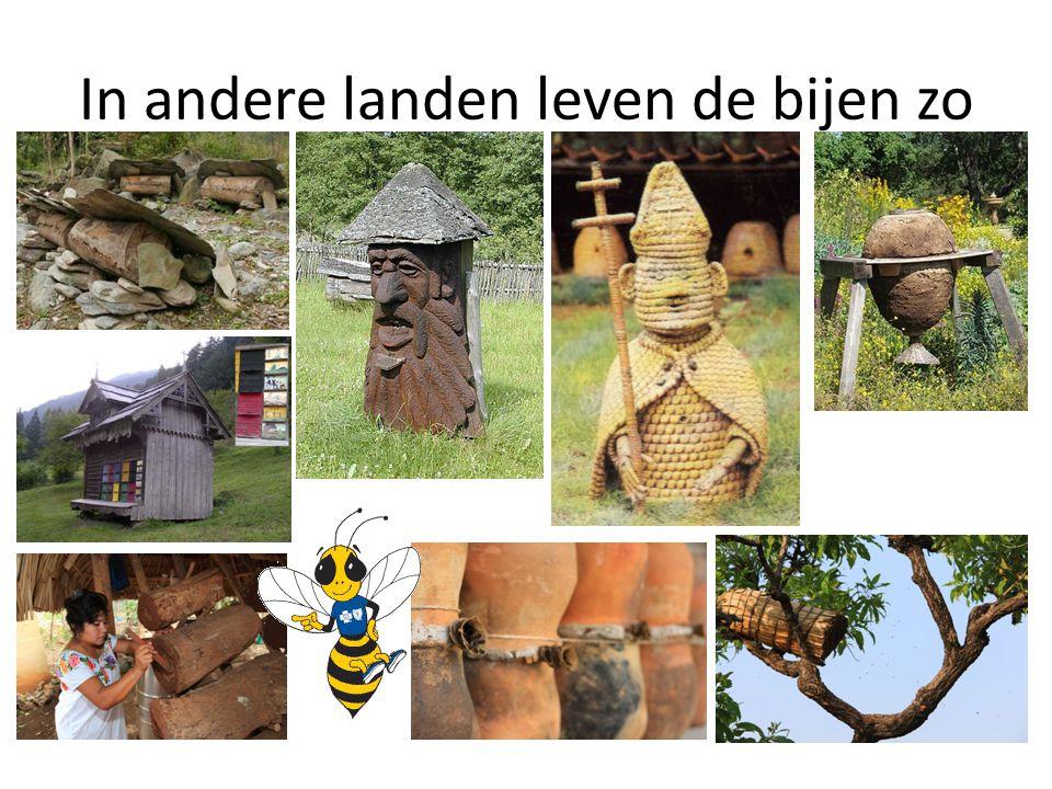 In andere landen leven de bijen zo