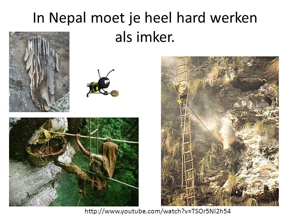 In Nepal moet je heel hard werken als imker. http://www.youtube.com/watch?v=TSOr5Nl2h54