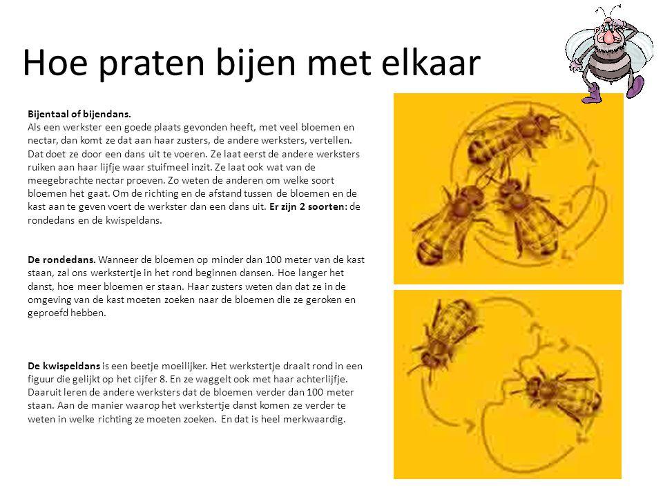 Hoe praten bijen met elkaar Bijentaal of bijendans. Als een werkster een goede plaats gevonden heeft, met veel bloemen en nectar, dan komt ze dat aan