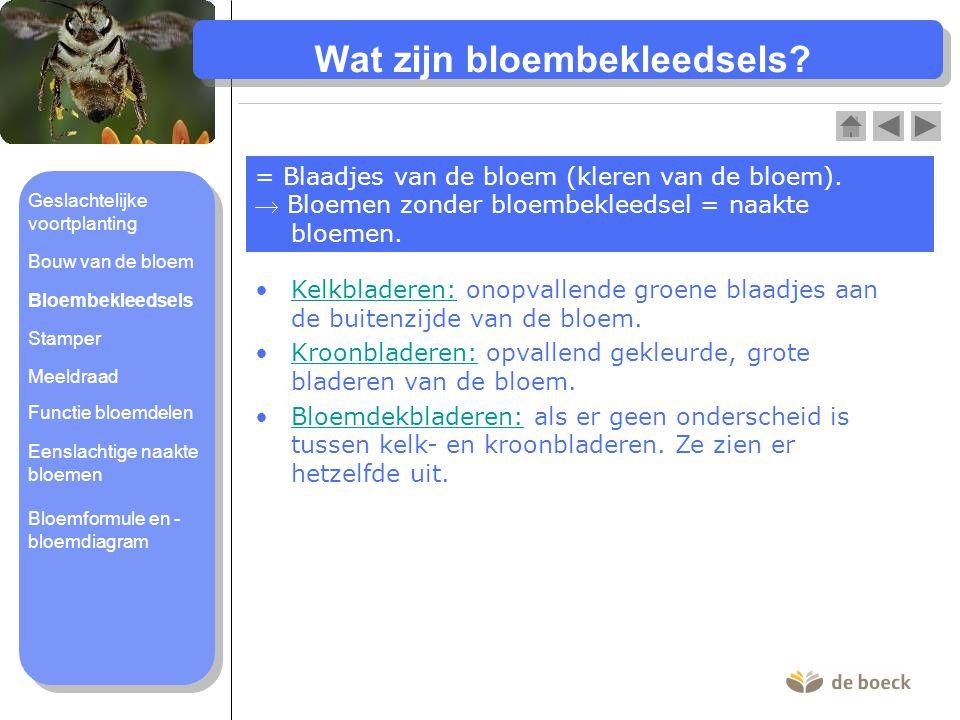 Wat zijn bloembekleedsels.= Blaadjes van de bloem (kleren van de bloem).