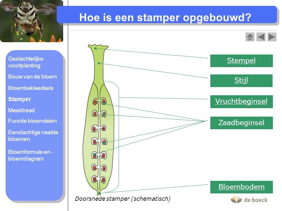 Doorsnede stamper (schematisch) Hoe is een stamper opgebouwd.