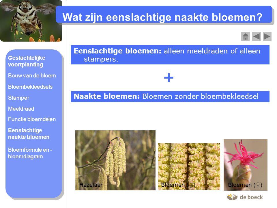 Wat is een bloemformule en – diagram.
