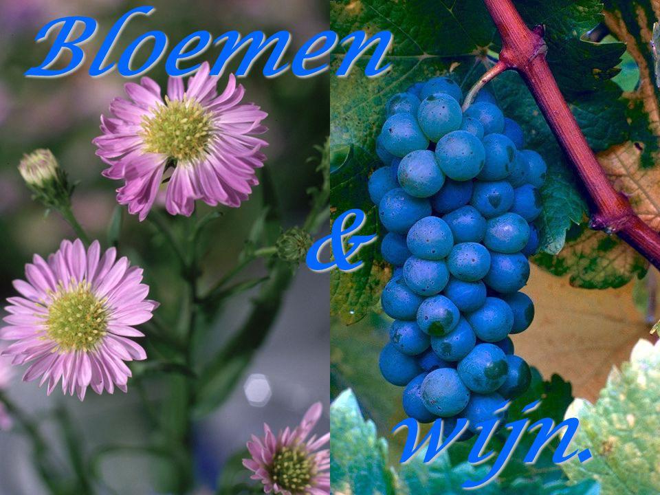 Bloemen & wijn.