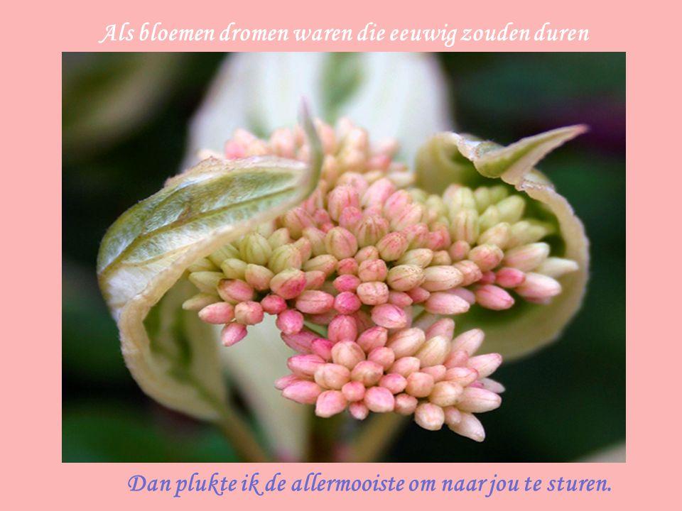 Als bloemen dromen waren die eeuwig zouden duren Dan plukte ik de allermooiste om naar jou te sturen.